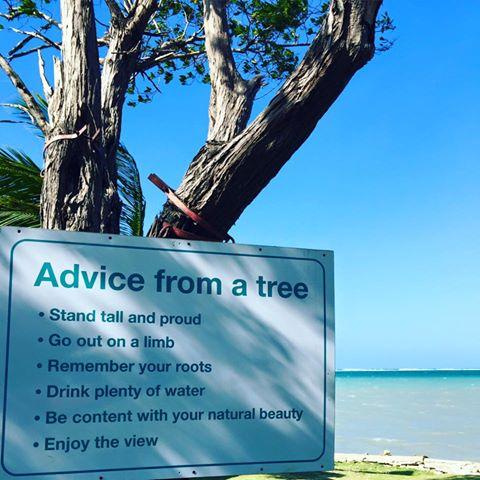 advicefromatree